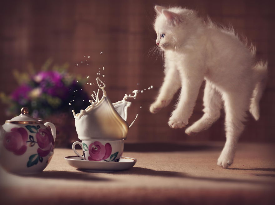 cute kitten jumping in the air
