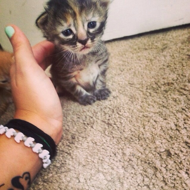 kitten that looks sad