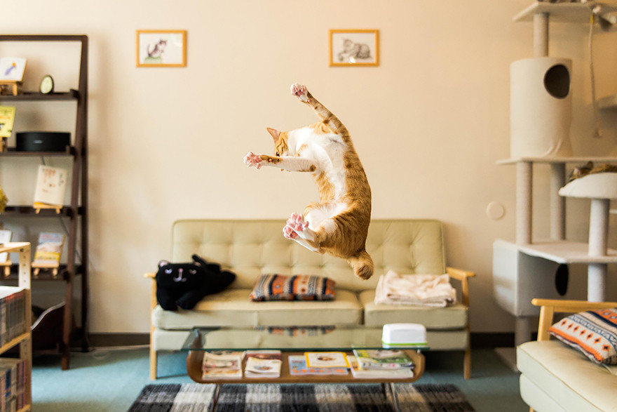 cat jumping in the air